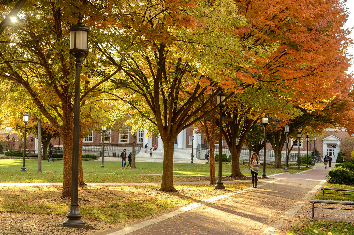 Campus trees during autumn